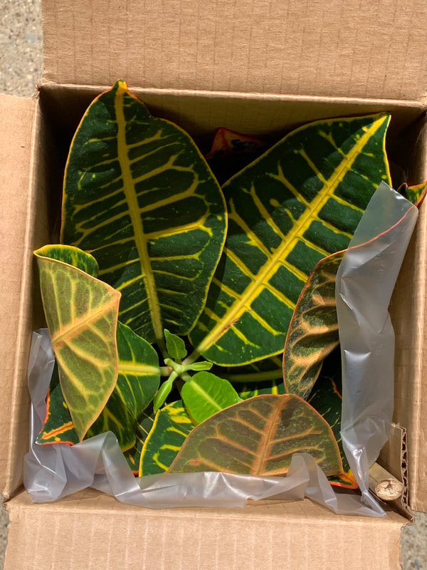 Ordering Plants Online - American Plant Exchange Review