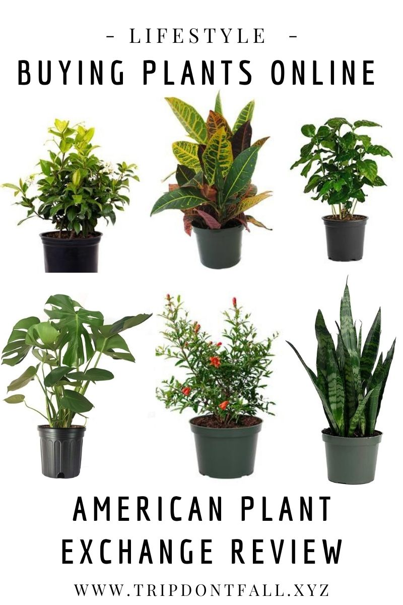 Ordering Monstera Plants Online - American Plant Exchange Review